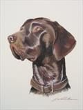 Monty by Sarah Luton, Painting, Pastel on Paper